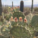Road Trippin' (Part Four) – Day Three: California to Arizona